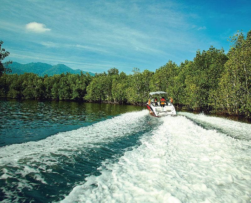 Mangrove Tour and Stingray Experience